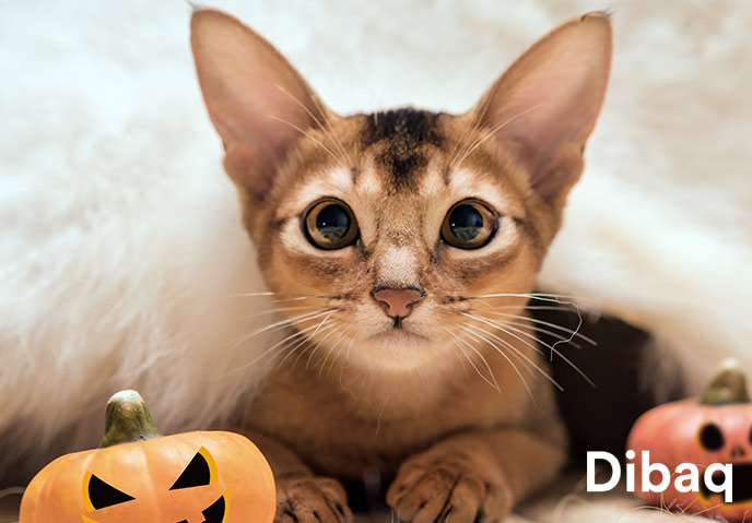 9926d-19-gato_halloween-post_688x479